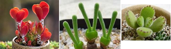 正能量爆棚的植物们