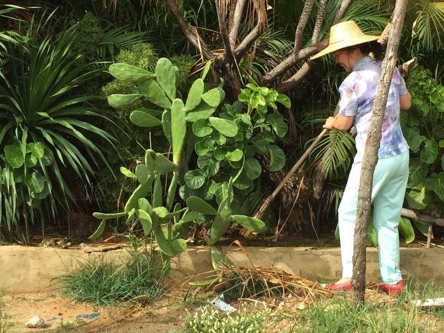 三亚市妇联党支部联合天涯区妇联开展党员志愿服务活动